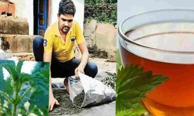 "alt="" uttarakhand dan singh Rautela start new self employment to made herbal tea by bichoo ghas"""