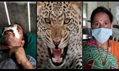 Uttarakhand: leopard tendua attack in pithoragarh jyoti saved her husband's life