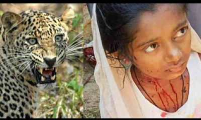 Uttarakhand : nainital leopard attack on girl