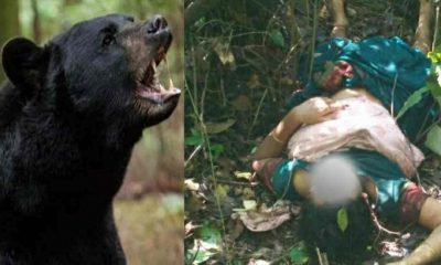 Uttarakhand bear attack on women in chamoli districT