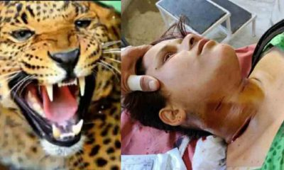 Uttarakhand leopard tendua attack on deepa rawat in chandak pithoragrah district