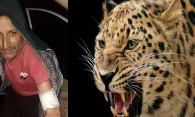 Uttarakhand news: Tendua attacked a young man jagmohan Mehta of Bageshwar district, clashed with a leopard to save his life.