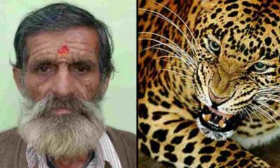 Uttarakhand news: 60 years old ramesh dutt pant died due to Leopard attack in almora.