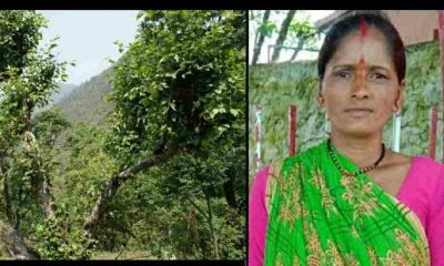 Uttarakhand news: Lila devi of Bageshwar district died due to fell from a tree.