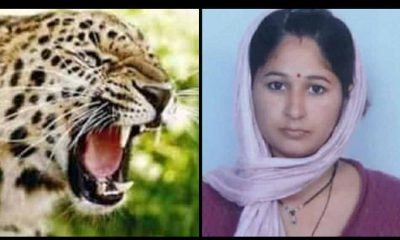 Uttarakhand: Deeksha Devi injured by attacking leopard in tanakpur woman died in hospital